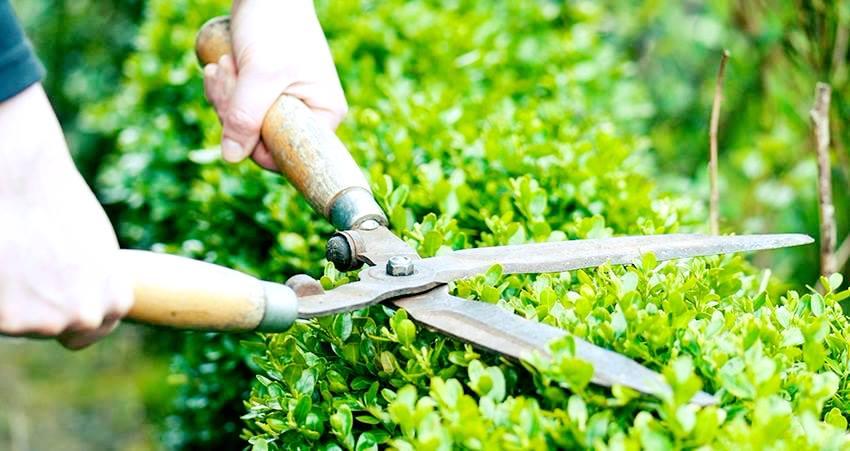 Cắt tỉa chăm sóc cây xanh