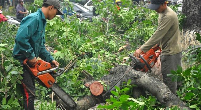Dịch vụ chặt cây