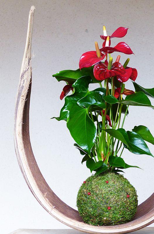 Cây hoa hồng môn