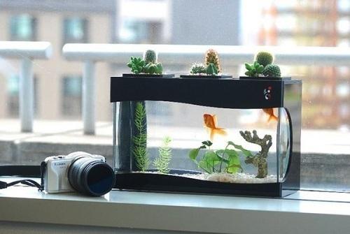 Bày trí cây cảnh hay chậu cá cảnh trong nhà sẽ giúp bạn làm việc tốt hơn.