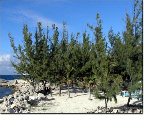 7 loại cây tuyệt đối không được trồng trong nhà để tránh điểm gở